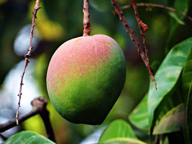 Mangoes: July Produce of theMonth